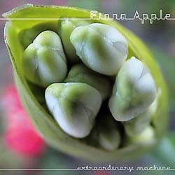 Fiona Apple  - Extraordinary Machine CD - 82876736362