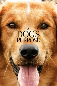 A Dog's Purpose DVD - 04245 DVDI