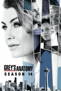 Grey's Anatomy: Season 14 DVD - 10229212